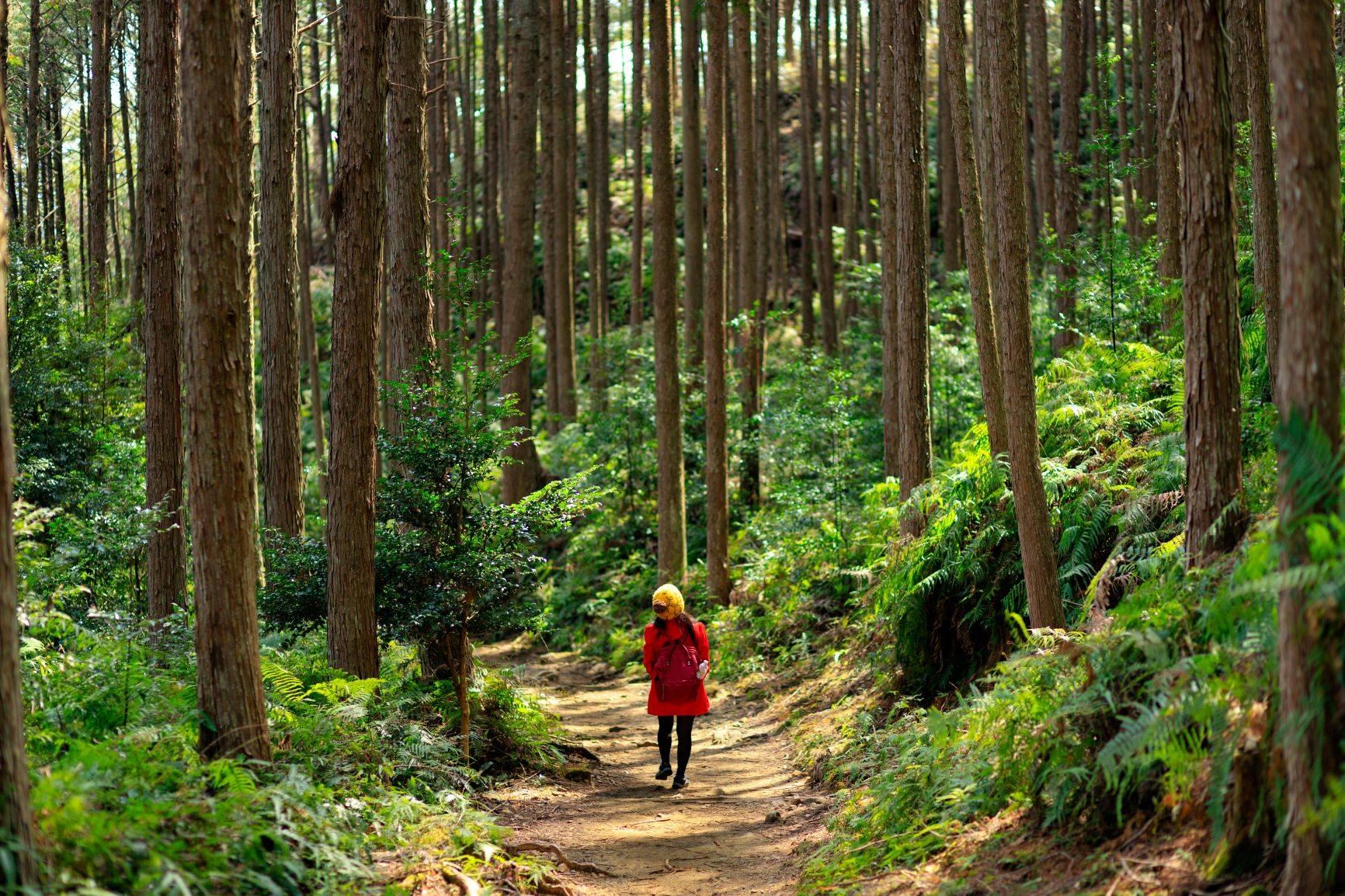 Spacery po lesie mogą leczyć. Sprawdź, czym jest sylwoterapia.