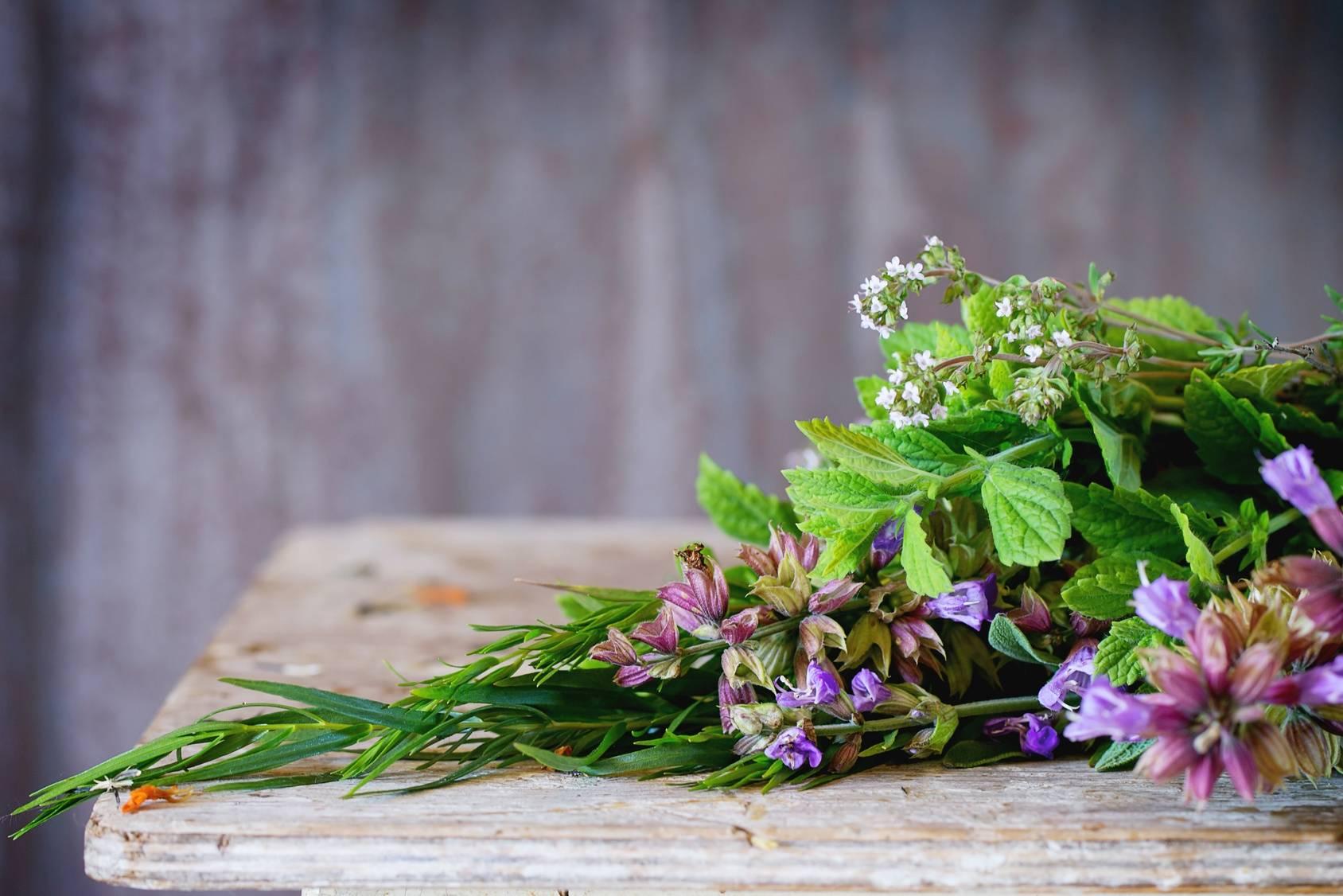 Ziołolecznictwo - naturalne antybiotyki z roślin.
