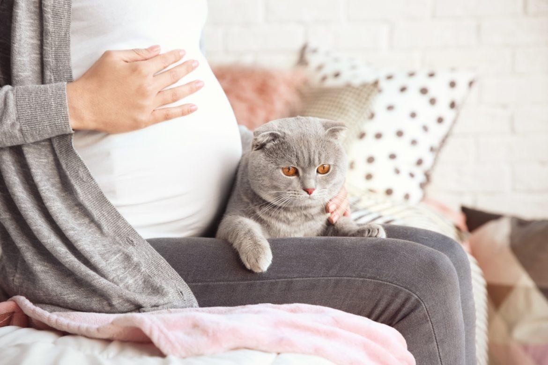 Toksoplazmoza w ciąży - objawy, przyczyny i leczenie. Kobieta w zaawansowanej ciąży siedzi na kanapie w domu z szarym kotem na kolanach.