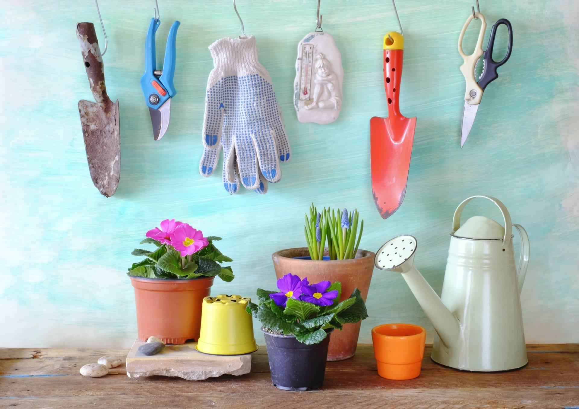 Warzywniak na balkonie - jak uprawiać warzywa?