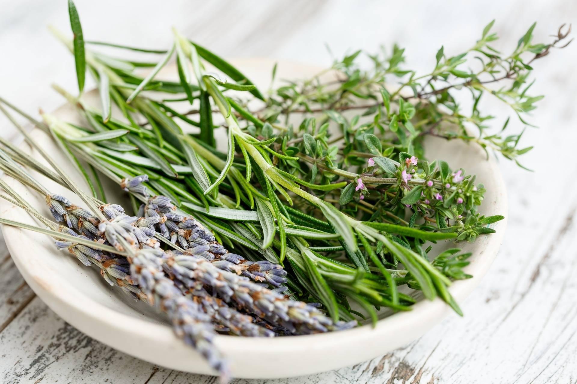 zioła - naturalne antybiotyki z roślin.